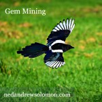 A gorgeous magpie with wings spread wide, coasting above a field, searching for shiny objects.
