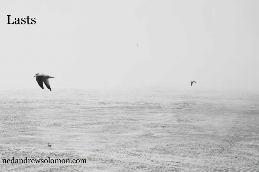 A black and white photo of a bird flying solo and away from where he's been. There's water below him and a foggy sky around him.