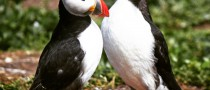 Two puffins chatting with Who Do You Know? above them.